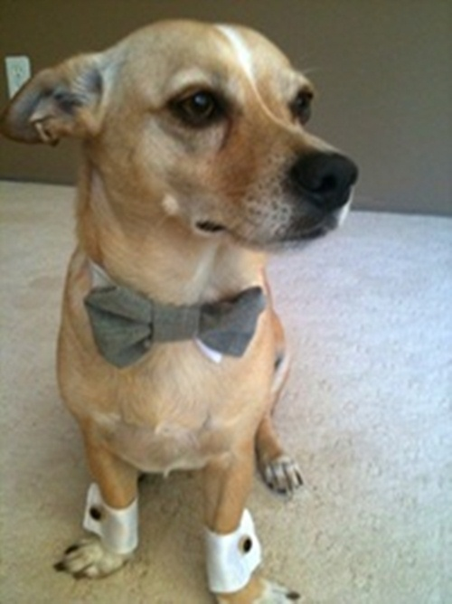Wedding dog cuffs and bow tie