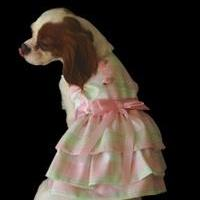 Dog Dress: soft pink and green pastel